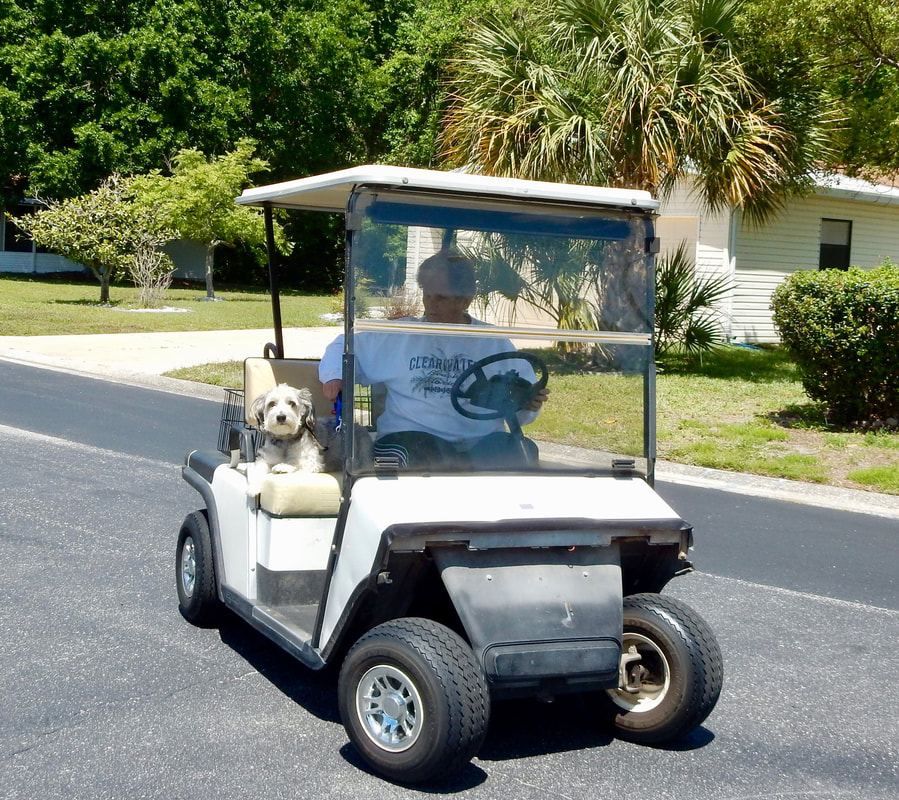 A small dog rides with his owner in a golf cart at Forest Glenn.